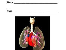 Edexcel new gcse pe 9 1 the cardio respiratory system work booklet edexcel new gcse pe 9 1 the cardio respiratory system work booklet ccuart Choice Image
