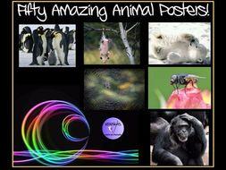 Animals: 50 Amazing Animal Posters