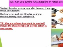 OCR BIOLOGY A MODULE 5: REFLEX ACTIONS