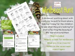 Minibeast Hunt KS1