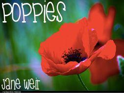 Poppies Jane Weir