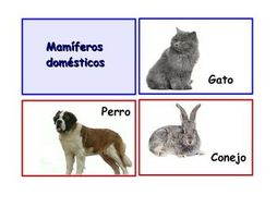 "Spanish Flash Cards ""Los animales"", Animals and their classifications. 90."