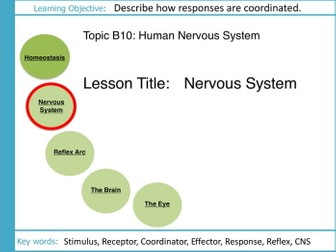 Aqa gcse b10 the human nervous system sequence of lessons by aqa gcse b10 the human nervous system l2 the nervous system ccuart Gallery