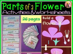 Parts of a Flower Activities, Worksheets, Flash Cards, Craft, Quiz, and  Word Wall