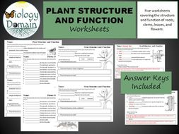 Plant Structure And Function Worksheets By Biologydomain Teaching