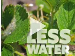 Flipside Science: Water-Wise Farms