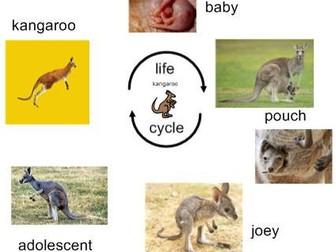 Life Cycle of Kangaroo - Interactive Activities and Worksheets
