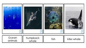 Ocean-Animals.pdf