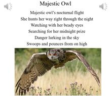 5.-Majestic-Owl---vocal.mp3