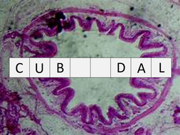 Mammalian gaseous exchange system (OCR A-level Biology A)