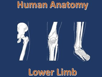 Human Anatomy Quiz: Lower Limb