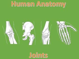 Human Anatomy Quiz: Joints