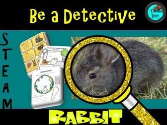 Rabbit  Life Cycle