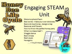 Bee  Life Cycle, STEAM