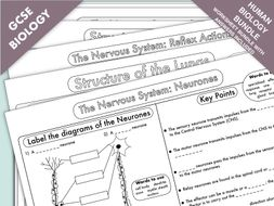 GCSE Biology Worksheet Bundle: Human Biology