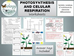 Photosynthesis and Cellular Respiration Worksheets