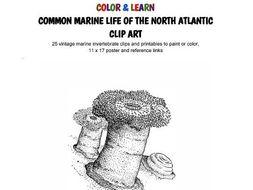 C O L O R & L E A R N - Common Marine Life of the North Atlantic - CLIP ART