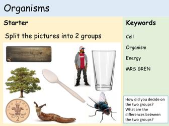 KS3 Cells - Lesson 1 - Organisms