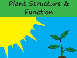 Plant Structure and Function Crossword and Word Search