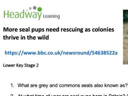 Reading comprehension - Seal pups need rescuing