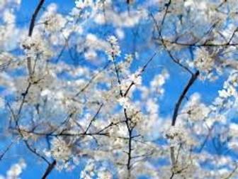 Spring Poems PPT