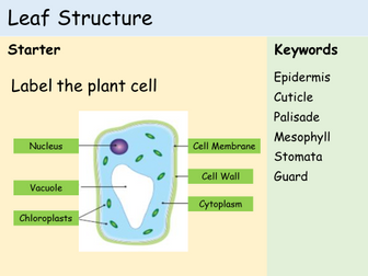KS3 Plants - Lesson 1 - Structure of a Leaf