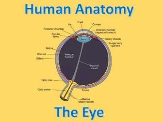 Human Anatomy Quiz: Eye