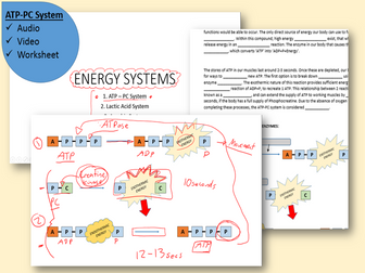ATP-PC ENERGY SYSTEM: Video and Worksheet by jbenson98530 | Teaching ...