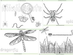 Minibeasts Colouring Sheets