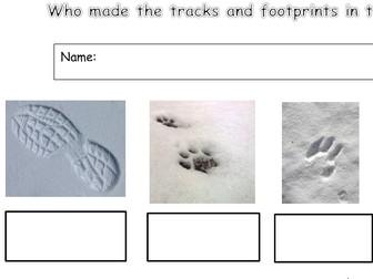 EYFS/KS1 Identify the footprints and tracks worksheet