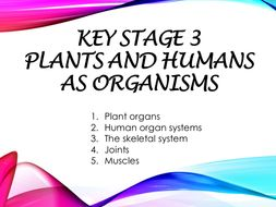 KS3_Secondary 1 checkpoint_worksheet and revision(with answer script):Plants and Humans as organisms