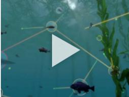 Exploring Ecosystems: Coastal Food Web
