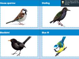 Bird matching pairs game by RSPB | Teaching Resources