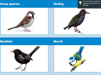Bird matching pairs game