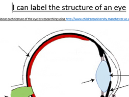Label the eye by RachelWelch | Teaching Resources