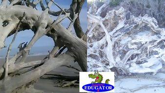 Dollar Stock Photos - Driftwood Beach