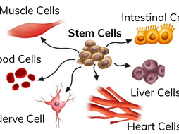 Stem Cells - Types & Uses