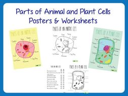 Consonant Digraph Worksheets Excel Parts Of Animal And Plant Cells  Posters And Worksheets By  Laws Of Motion Worksheet Word with Counting Tens And Ones Worksheets Excel Worksheet Teachstarteranimalplantcellsposterworksheet Percentage Word Problems Worksheets Word