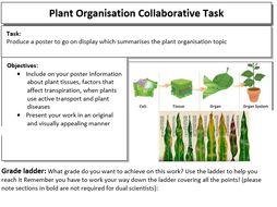 New AQA Plant organisation Collaborative poster task