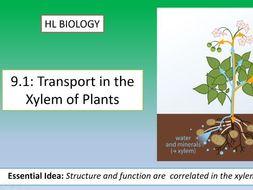 IB Biology HL Unit 9.1: Transport In Xylems of Plants