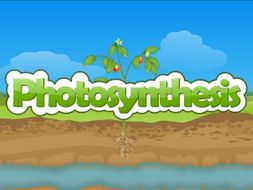 Plants and Photosynthesis