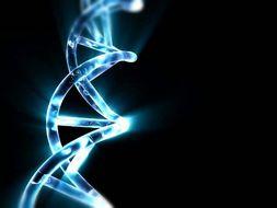 IB Biology Topic 2 - Molecular Biology