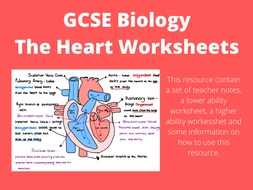 GCSE Biology - The Heart Activity   Teaching Resources