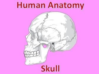 Human Anatomy Quiz: Skull