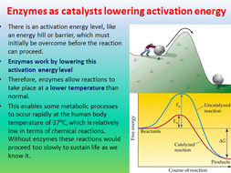 Enzyme action - AQA AS 3.1.4.2