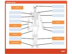 GCSE PE: Skeletal System - Interactive Drag and Drop