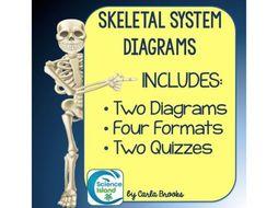 Skeletal System Diagrams: Study, Label, Color and Quiz