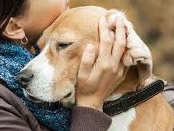 Caring for animals: Strand 3 -The dog around the home