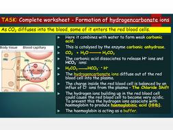 OCR A level Biology (H020) - Module 3 - Transporting carbon dioxide