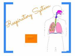 Repiratory System Prezi
